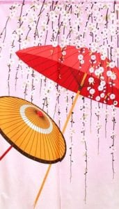 Noren Umbrellas and Cherry Blossoms